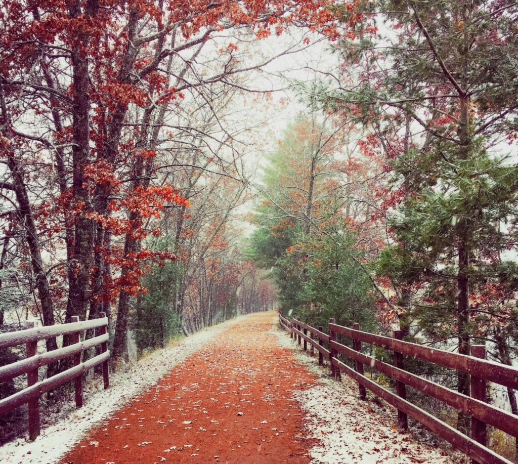A forest trail is lightly dusted with snow.