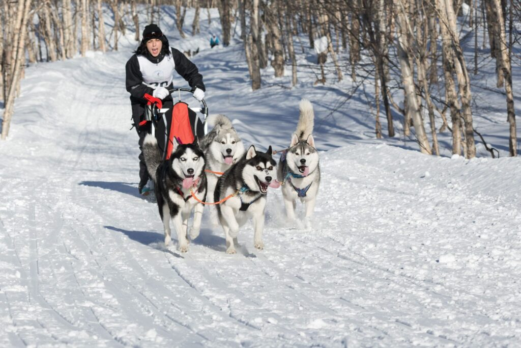 Sled Dog Races Wisconsin