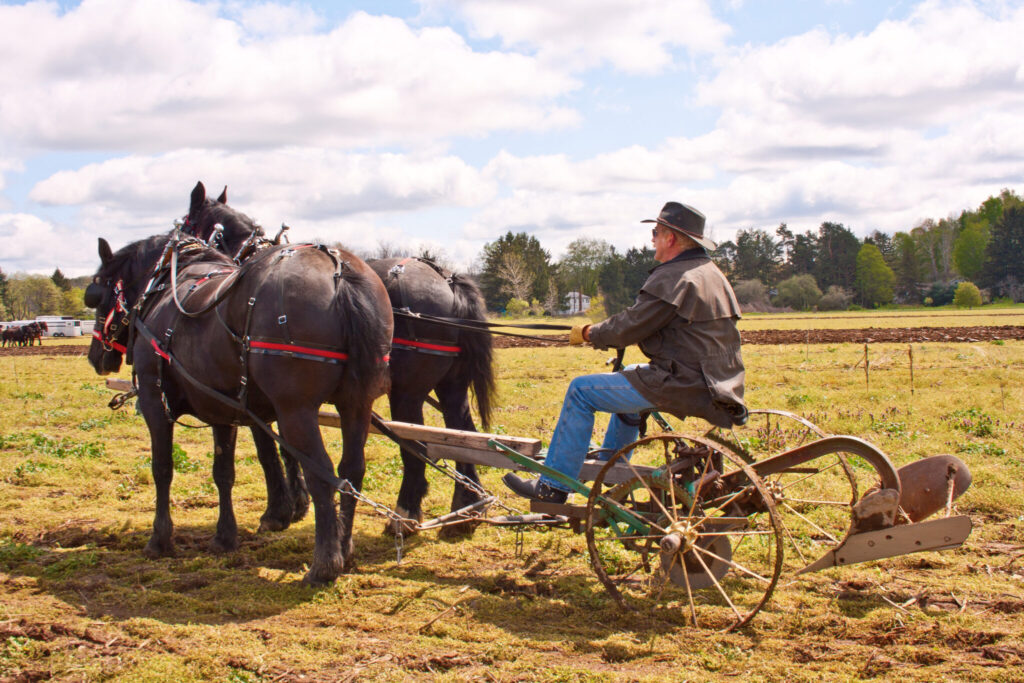 old fashioned plow day